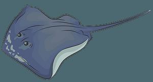 Southern Stingray clipart