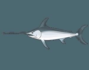 Swordfish clipart