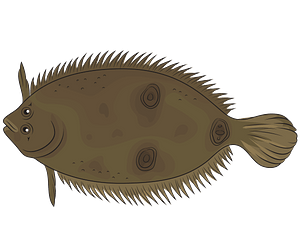 Three Eye Flounder clipart