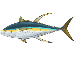 Yellowfin Tuna clipart