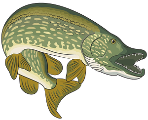 Young Northern Pike Bucktail clipart