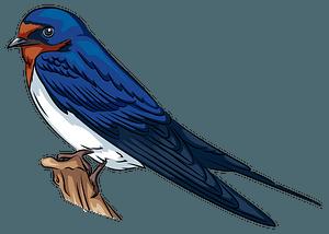 Barn Swallow clipart