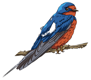 Barn Swallow on the Branch clipart