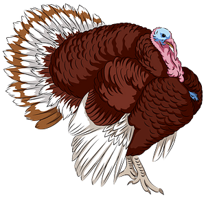 Bourbon Red Turkey clipart