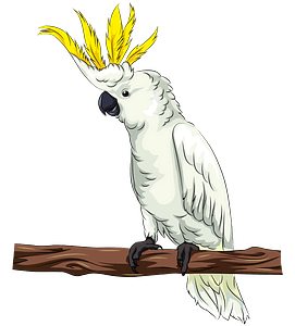 Cockatoo clipart