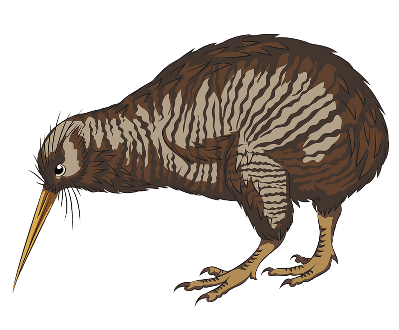 Little Spotted Kiwi clipart