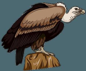Long Billed Indian Vulture clipart