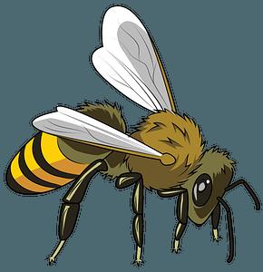 European Honeybee clipart
