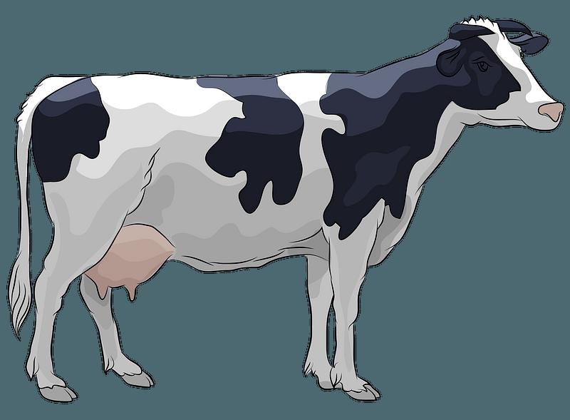 Vaca frisona clipart