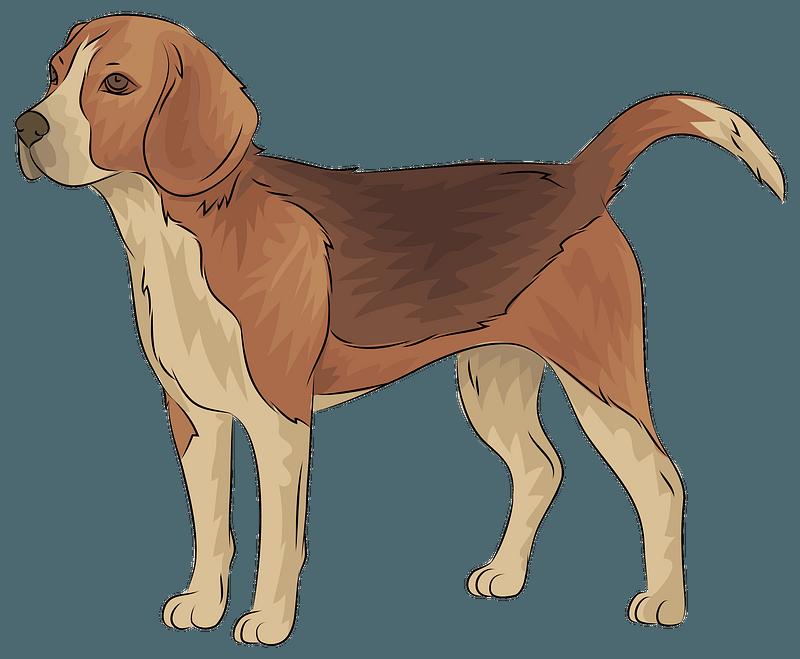 Christmas Beagle Clipart.Beagle Clipart Free Download Creazilla