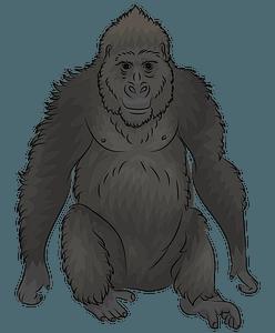 Västlig gorilla clipart
