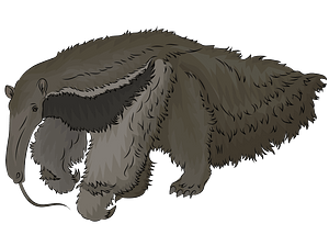 Anteater clipart