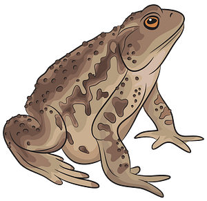 Asiatic Toad clipart