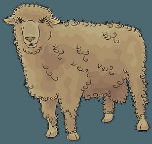 Corriedale Sheep clipart
