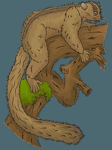 Masoala fork crowned lemur clipart