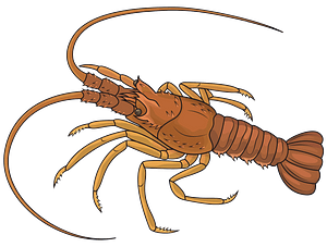 Mediterranean Lobster clipart