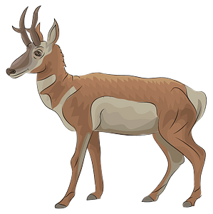 Pronghorn clipart