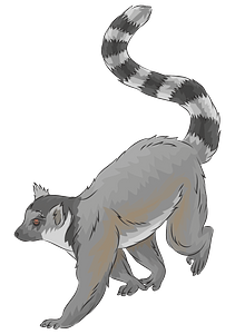 Ring-tailed Lemur clipart