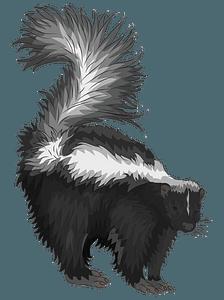 Striped skunk clipart