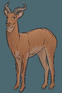 Uganda kob antelope clipart