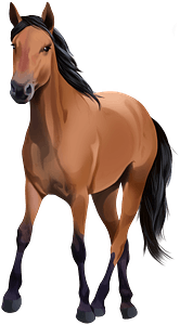 Kiger Mustang clipart
