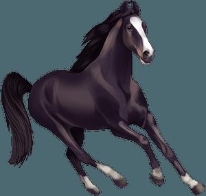 Marwari horse clipart