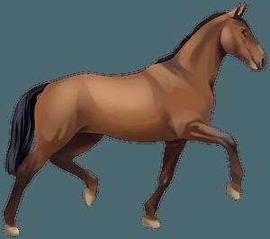 Ольденбурзький кінь кліпарт