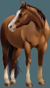Американський скакун (кватерхорс) кліпарт