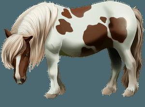 Шетлендський поні кліпарт