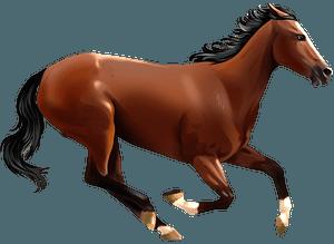 Чистокровний англійський верховий кліпарт