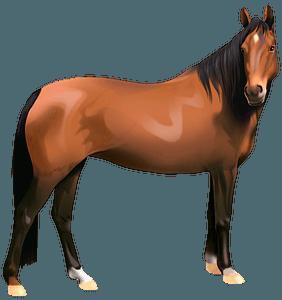 Напівкровний кінь кліпарт