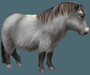 Валійський поні кліпарт