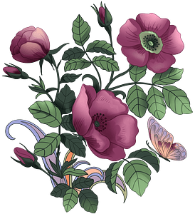 Purple poppies clipart