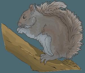 Eastern Grey Squirrel clipart