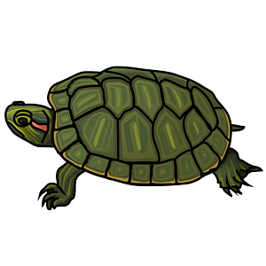 Red-eared slider turtle clipart