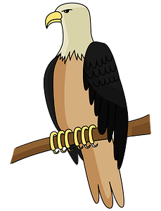 Bald Eagle clipart