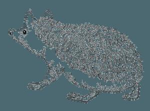 Long-eared hedgehog clipart