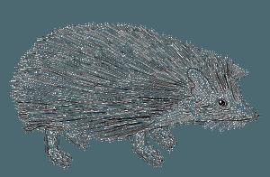 Indian long-eared hedgehog clipart