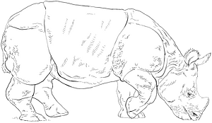 Indian rhino clipart
