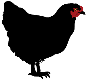 Black Hen clipart