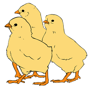 Three Chicks clipart