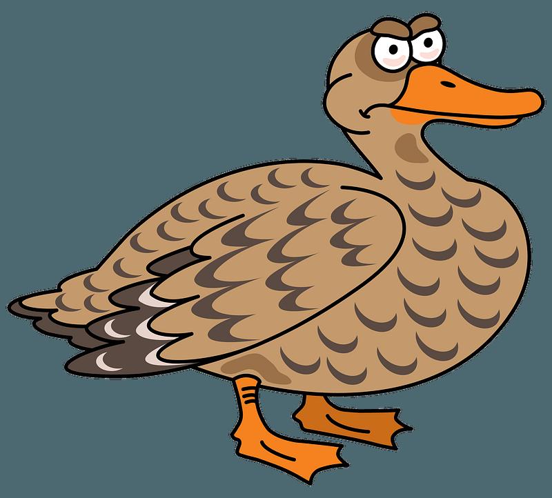 Duck clipart