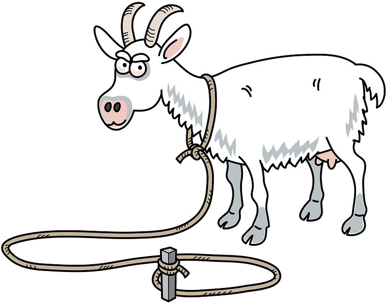 Goat tied on the rope clipart