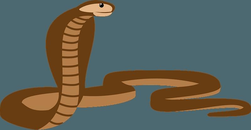 Cobra Snake Clipart Free Download Transparent Png Creazilla