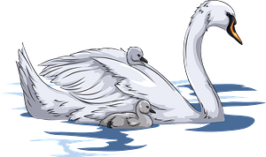 Mute Swan with Cygnets immagine clipart