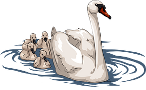 Swan with cygnets clipart