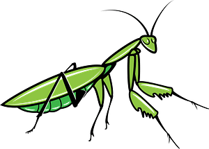 Grasshopper clipart