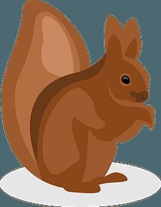 Squirrel clipart