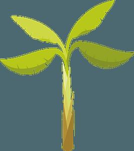 Banana palm clipart