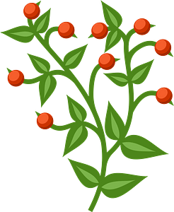 Branch with red berries clipart